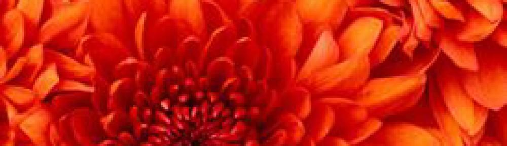 cropped-Flower.jpg